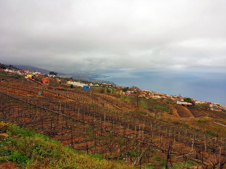 Valle de Guerra slėnio vynuogynai